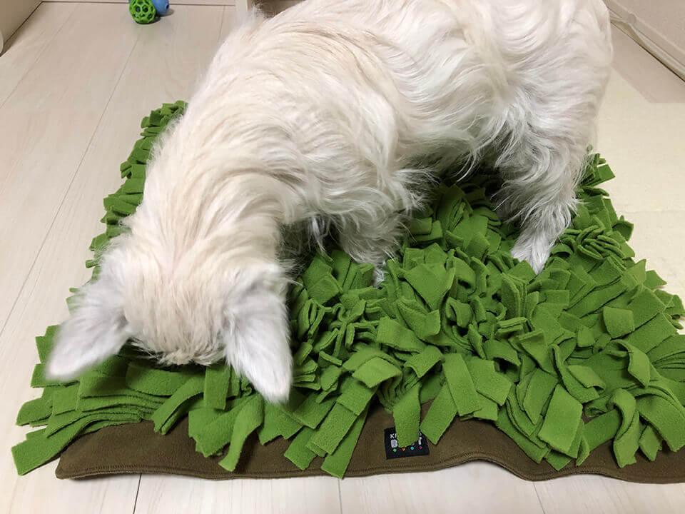 ノーズワークのマットを嗅いで遊ぶウェスティの子犬